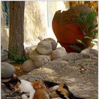 Потомки античных кошек... :: Кай-8 (Ярослав) Забелин
