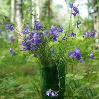 Цветики лесные :: Галина Кан