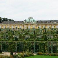 Виноградные террасы на фоне дворца Сан-Суси :: Елена Павлова (Смолова)