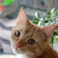 Портрет молодого кота :: Anatolyi Usynin