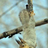 Утепление для гнезда. :: Алексей .