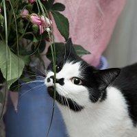 Люблю цветы :: Игорь Машкин