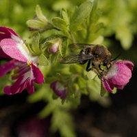 ... и пчела :: Елена Ахромеева
