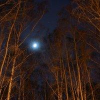 ночью в парке :: Михаил Фролов