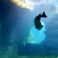Подводный мир гамбургского зоопарка :: Денис Кораблёв