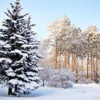 Зима уже в прошлом :: Лидия (naum.lidiya)