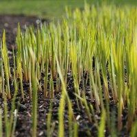 о траве :: Anrijs Slišāns