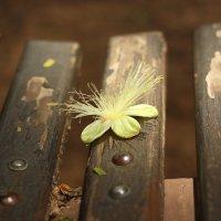 цветок :: Анна Бушуева