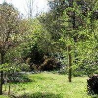 Прогулка в Ботаническом саду... :: Тамара (st.tamara)