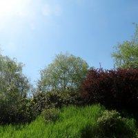 Прогулка по Ботаническому саду...2 :: Тамара (st.tamara)