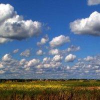 Облака плотнее к горизонту :: Сергей Тарабара