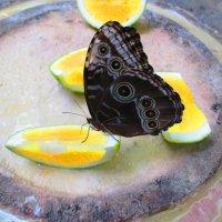 Бабочка :: Lyudmila Gruzdeva