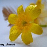 Цветок и перо :: Наталья (ShadeNataly) Мельник