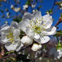 Весны творения :: Наталья Джикидзе (Берёзина)