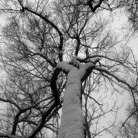 Весенний снег :: Инна Буяновская