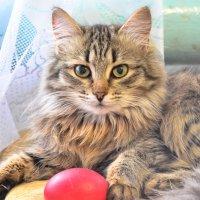 Котёнок :: Татьяна Гринчук