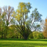 Ах, весна зеленоокая!! :: Galina Dzubina