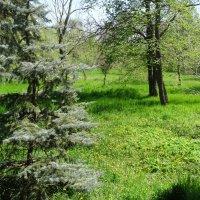 Прогулка в Ботаническом саду...3 :: Тамара (st.tamara)