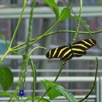Бабочка в тропическом саду :: Елена Левковская