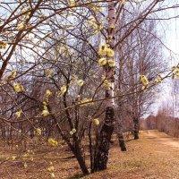Ждите весну, обязательно ждите :: Татьяна Ломтева