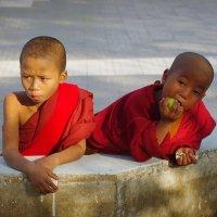 Маленькие монахи :: Михаил Рогожин
