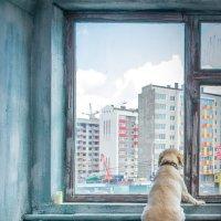 Берегите себя и помните, что дома Вас ждут! :: Алексей Яковлев