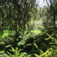 Апрель в Ботаническом саду... :: Тамара (st.tamara)