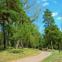В весеннем лесу :: Милешкин Владимир Алексеевич
