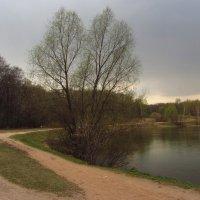 IMG_6881 - Кажется, дождь собирается :: Андрей Лукьянов