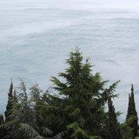 Вид на море :: Елена Шидловская