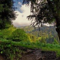 Поднимаясь горы :: Сергей Мурзин