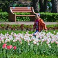 Тюльпаны бывают разные - желтые, белые, красные... :: Anna Gornostayeva