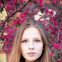 Портрет девушки :: Алла Панасенко