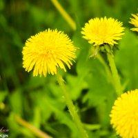 А пчелу то я и не заметил))) :: vcherkun