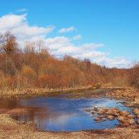 Весна в лесу. :: Галина Pavlova