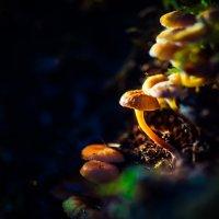 Первые грибы :: Di Hally