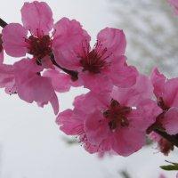 Весна в Краснодаре :: Виталий Бараковский