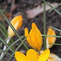 Улыбка весны долгожданной.... :: Tatiana Markova