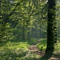 Утро в лесу :: Денис Масленников