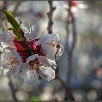 Весенний калейдоскоп :: Лидия Цапко