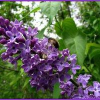 Кому нектар, кому добыча :: Андрей Заломленков