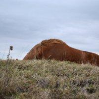 И спины лошадей как горы :: Елена Глебова