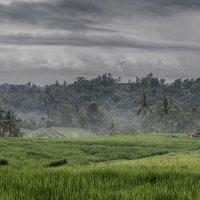 Бали,провинция Табанан :: Александр