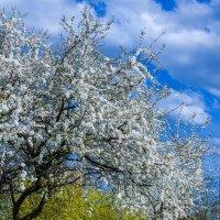 Краски весны :: Леонид Соболев