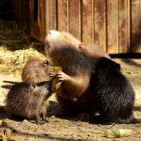 Да дайте ж матери поесть!!! :: Светлана Винокурова