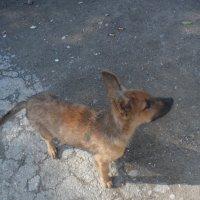 Собака - верный друг человека! :: Елена Чупятова