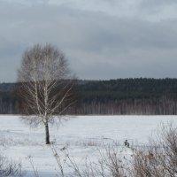 одинокая береза :: Валерий A.