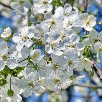 это весна :: yuri zaitsev