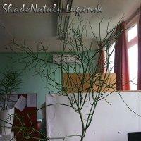 Чудо-цветок :: Наталья (ShadeNataly) Мельник