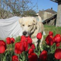 Весна :: Наталия Иванова